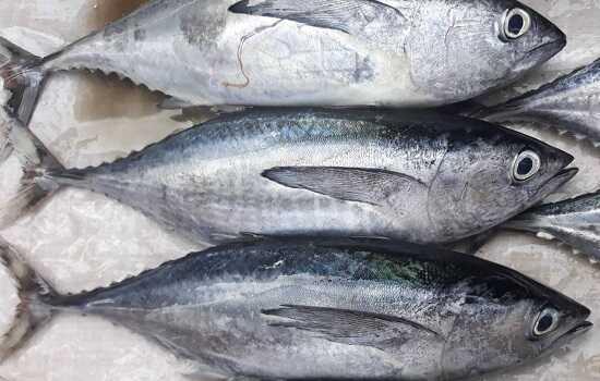 3 loại cá là vựa chứa kim loại nặng, tuyệt đối không được ăn kẻo phá hỏng nội tạng